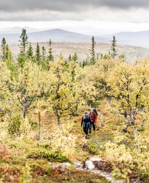 Fjällnära liv med BearPeak. Foto Gösta Fries.